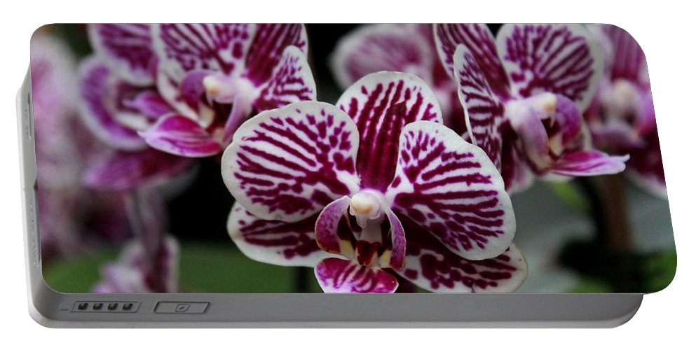 Orchid Portable Battery Charger featuring the photograph Heartbreak Smile by Michiale Schneider