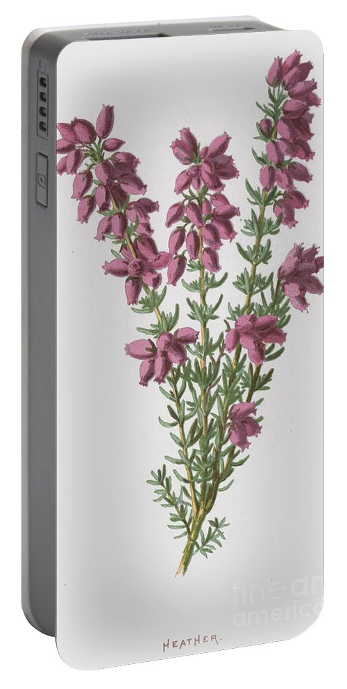 Heather Portable Battery Charger featuring the painting Heather by Frederick Edward Hulme