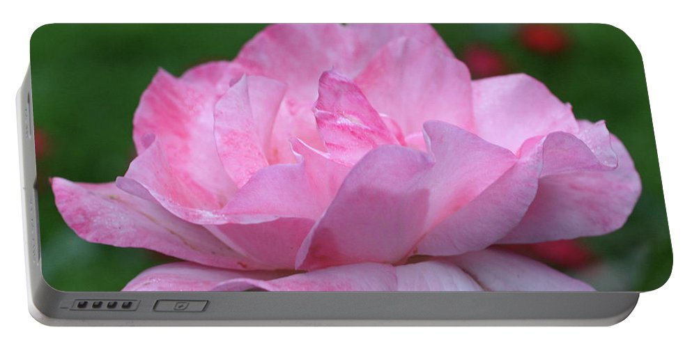 Flower Portable Battery Charger featuring the photograph Heavenly Pink Rose by Smilin Eyes Treasures