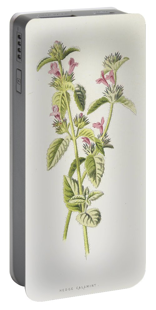 Basil Portable Battery Charger featuring the painting Hedge Calamint by Frederick Edward Hulme