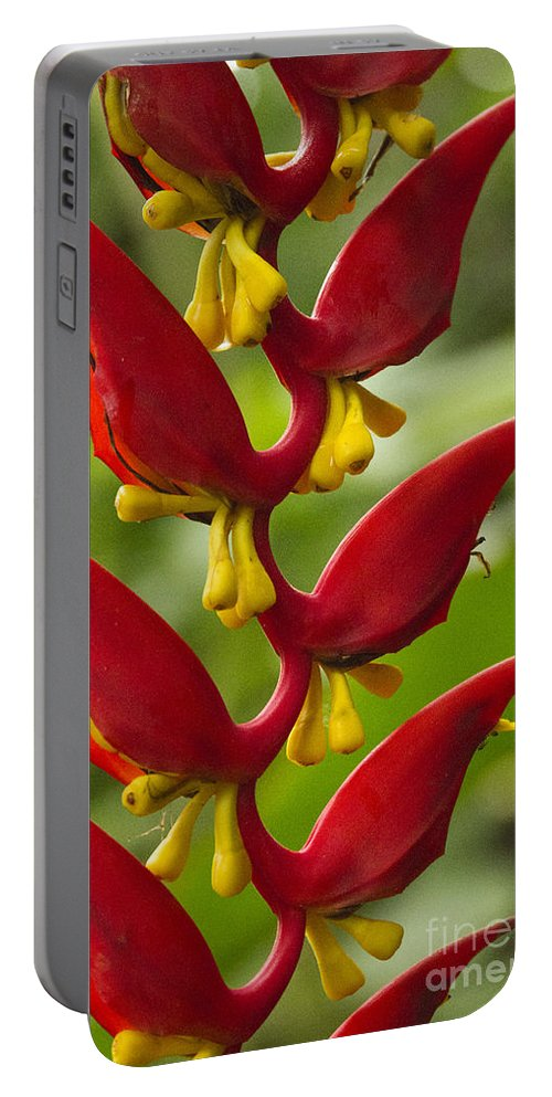 Heliconia Portable Battery Charger featuring the photograph Heliconia Dielsiana by Heiko Koehrer-Wagner