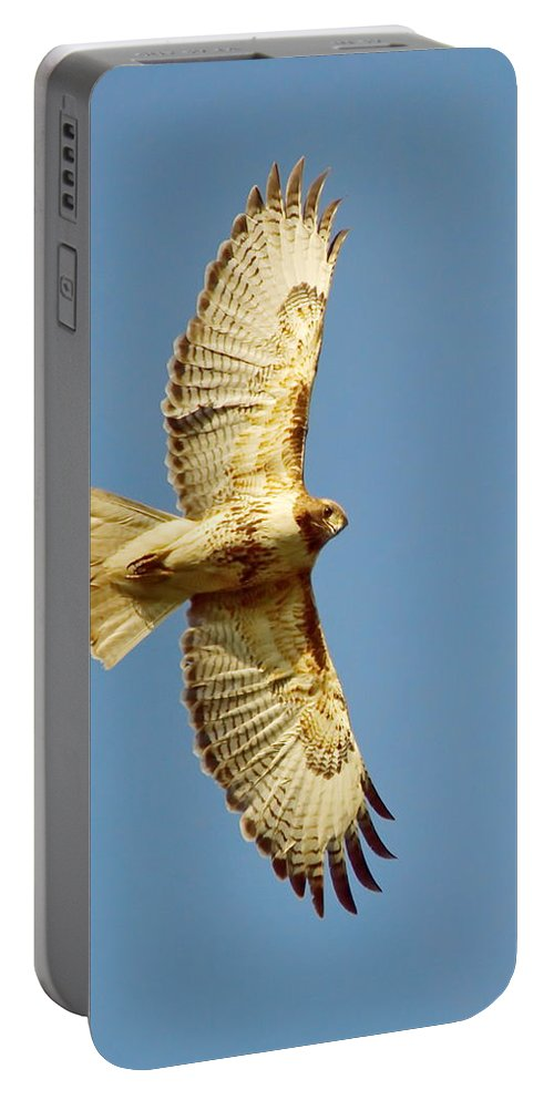 Nature Portable Battery Charger featuring the photograph Hello Down There by Crystal Massop