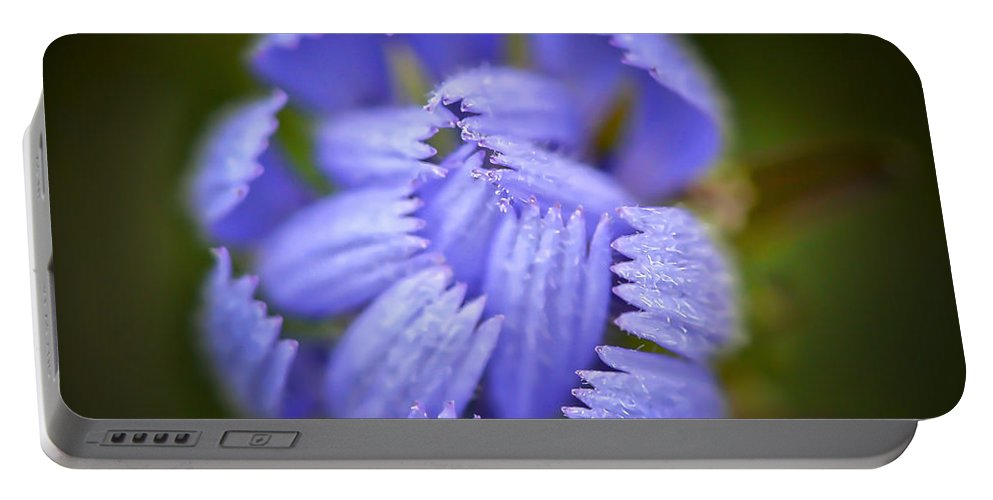 Blue Chicory Wildflower Portable Battery Charger featuring the photograph Helping Hands by Kerri Farley