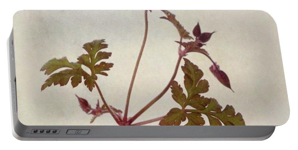 Beautiful Portable Battery Charger featuring the photograph Herb Robert - Wild Geranium  #flower by John Edwards