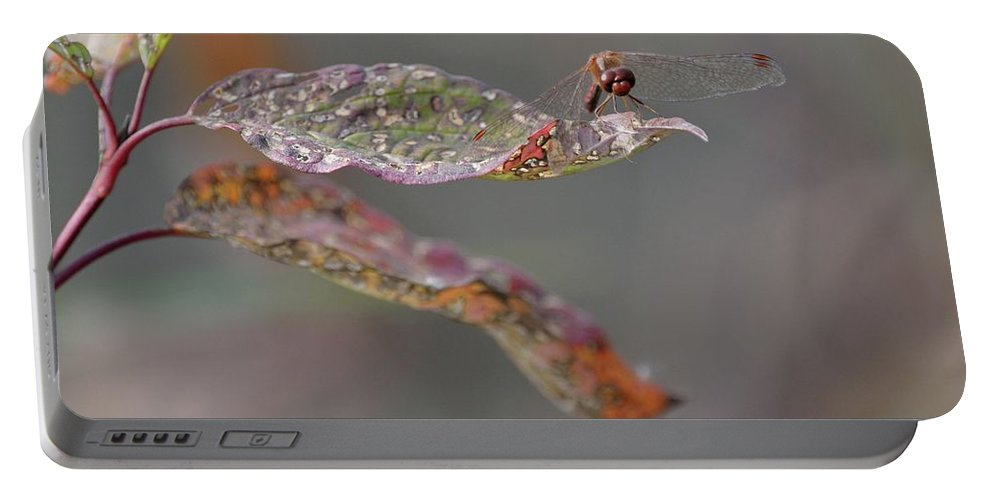 Outdoor Portable Battery Charger featuring the photograph Here's Lookin' At You- Dragonfly by David Porteus