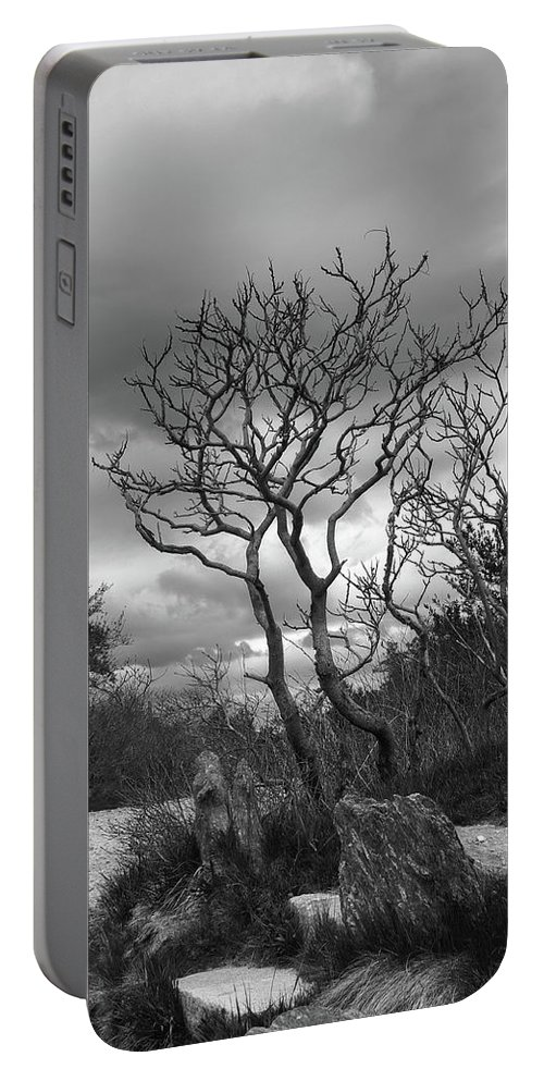 Tree Portable Battery Charger featuring the photograph Hermit Island Tree 0192 by Guy Whiteley