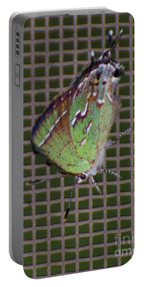 Butterfly Portable Battery Charger featuring the photograph Hessel's Hairstreak Butterfly by Donna Brown