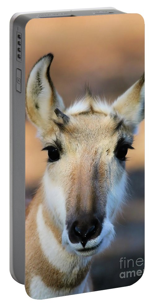 Animal Portable Battery Charger featuring the photograph Hey You by Karol Livote
