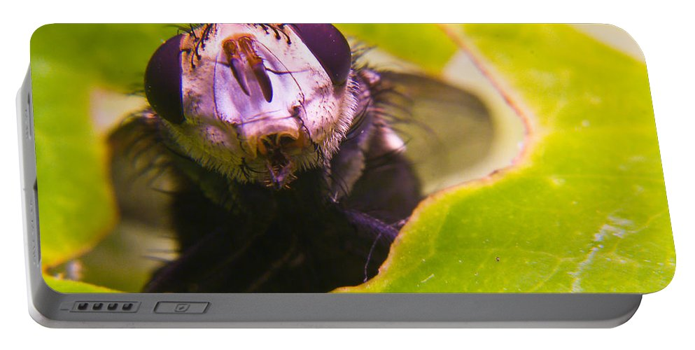 Fly Portable Battery Charger featuring the photograph Hi There by Douglas Barnett