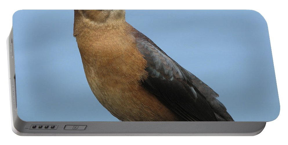 Bird Portable Battery Charger featuring the photograph Hi There by Stacey May