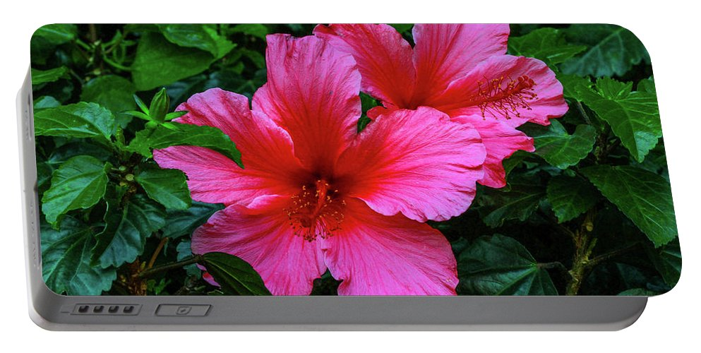 Flower Portable Battery Charger featuring the photograph Hibiscus by Robert Moorhead