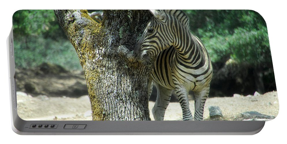Zebra Portable Battery Charger featuring the photograph Hide And Seek by Donna Blackhall
