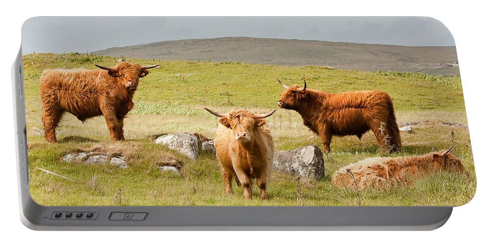 Scotland Portable Battery Charger featuring the photograph Highland Cattle by Colette Panaioti