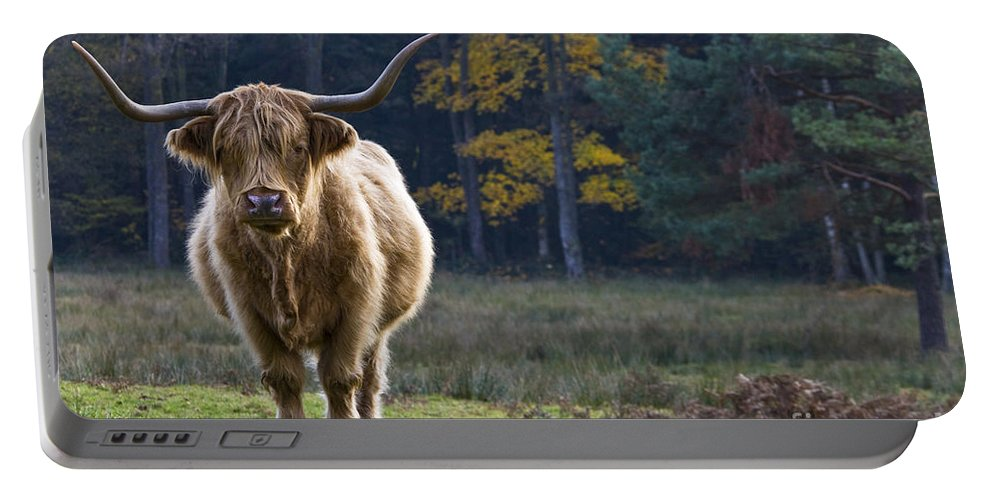 Highland Cow Portable Battery Charger featuring the photograph Highland Cow In France by Jean-Louis Klein & Marie-Luce Hubert