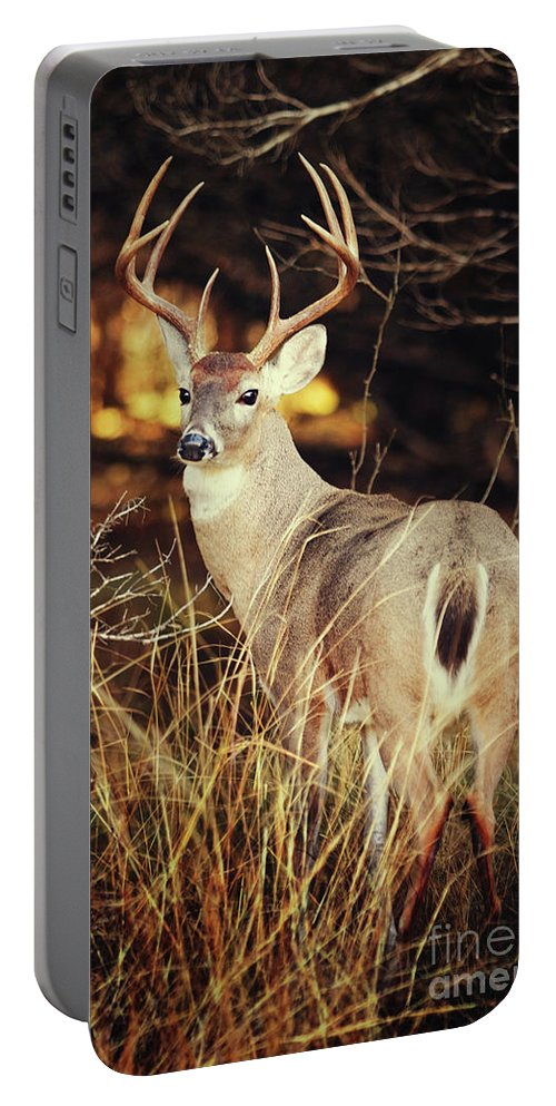 Deer Portable Battery Charger featuring the photograph Hill Country by Katya Horner