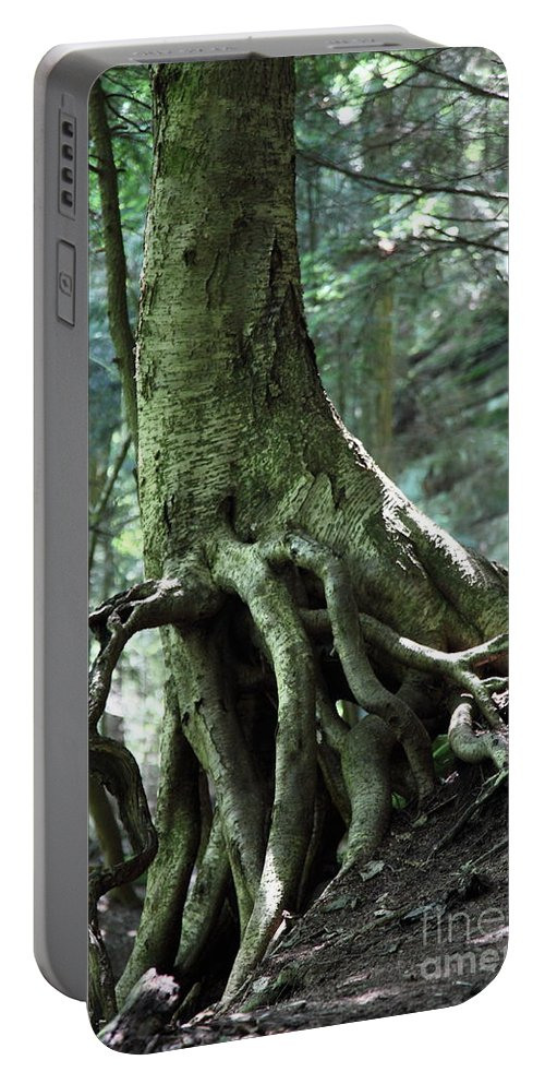 Trees Portable Battery Charger featuring the photograph Hold On To Me. by Amanda Barcon