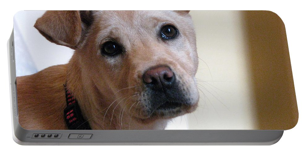 Dog Portable Battery Charger featuring the photograph Honey by Amanda Barcon