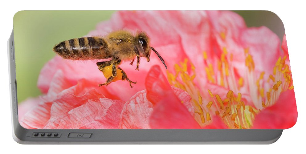 Background Portable Battery Charger featuring the photograph Honey Bee In Flight by Mircea Costina Photography