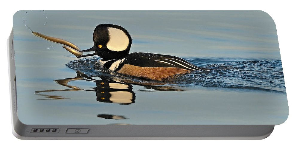 Merganser Portable Battery Charger featuring the photograph Hooded Merganser And Eel by William Jobes