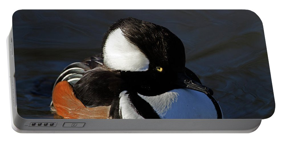 Birds Portable Battery Charger featuring the photograph Hooded Merganser by Bob Kemp