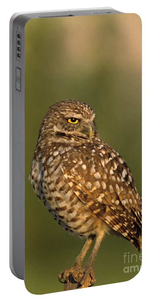 Bird Portable Battery Charger featuring the photograph Hoot A Burrowing Owl Portrait by John Harmon