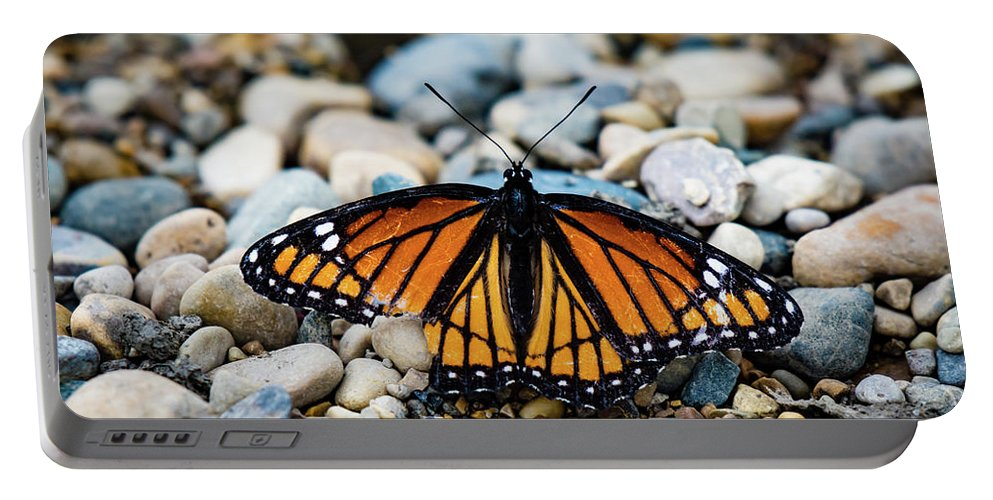 Monarch Butterfly Portable Battery Charger featuring the photograph Hope Of The Monarch Butterfly by Henry Kim