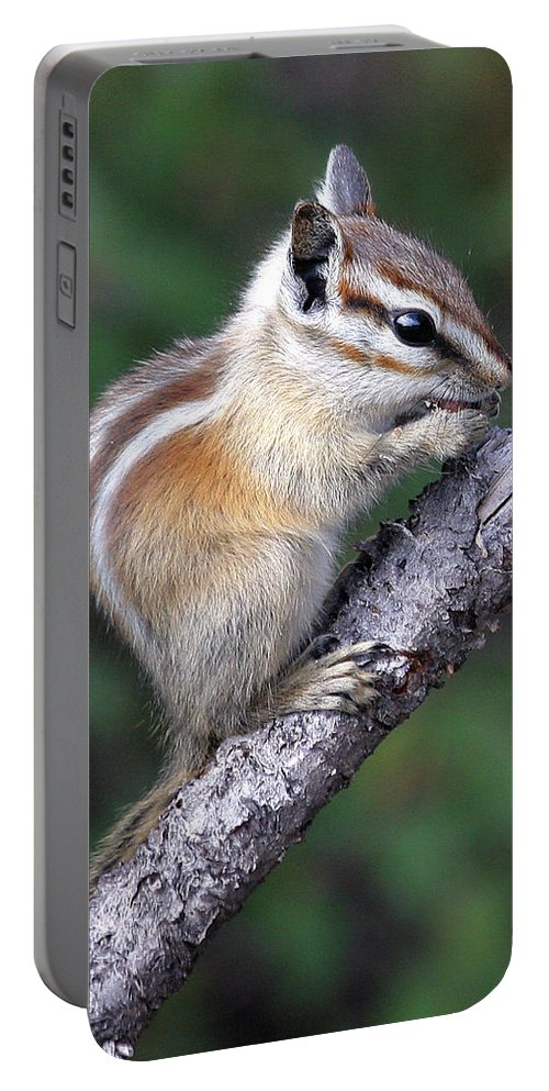 Chipmunk Portable Battery Charger featuring the photograph Hopi Chipmunk by Doris Potter