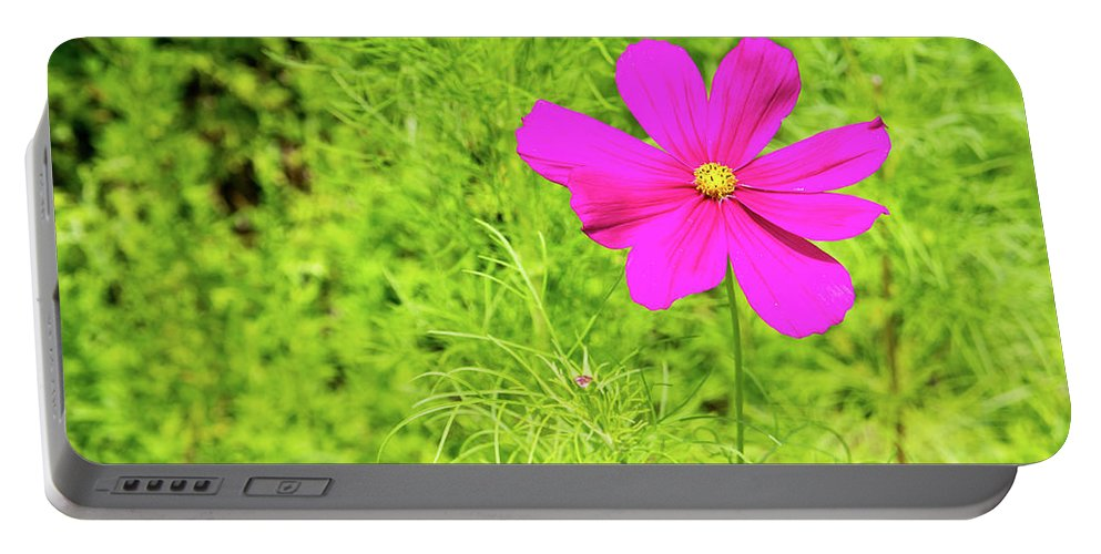 Nature Portable Battery Charger featuring the photograph Pink Cosmos II by Adam Gladstone