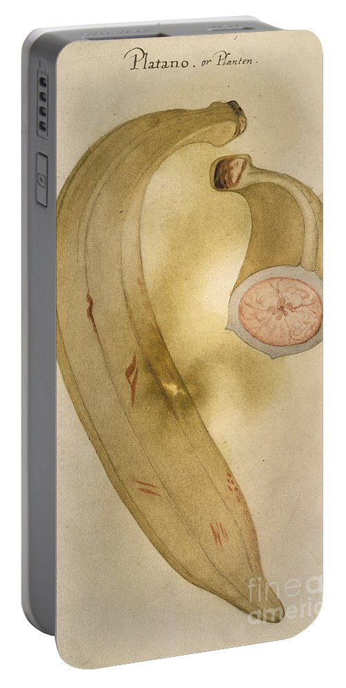1585 Portable Battery Charger featuring the photograph Horn Plantain, 1585 by Granger