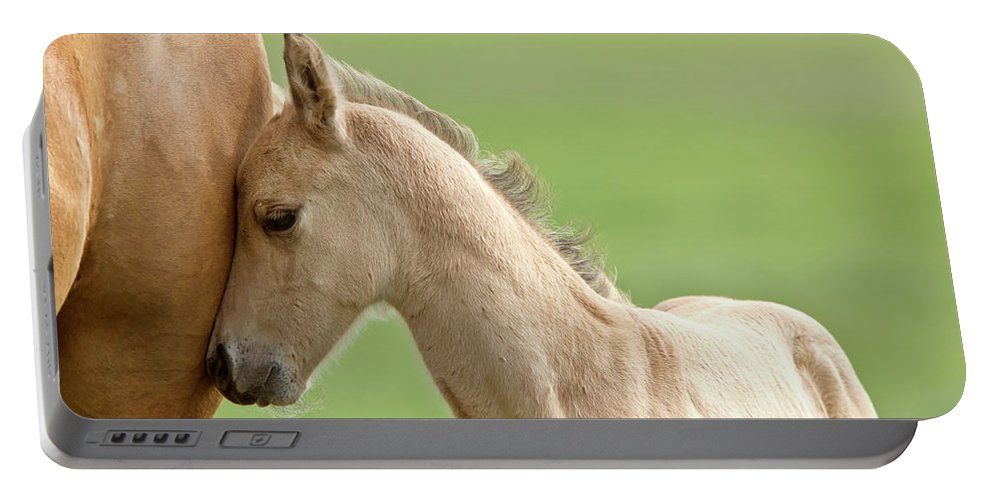 Horse Portable Battery Charger featuring the digital art Horse And Colt by Mark Duffy