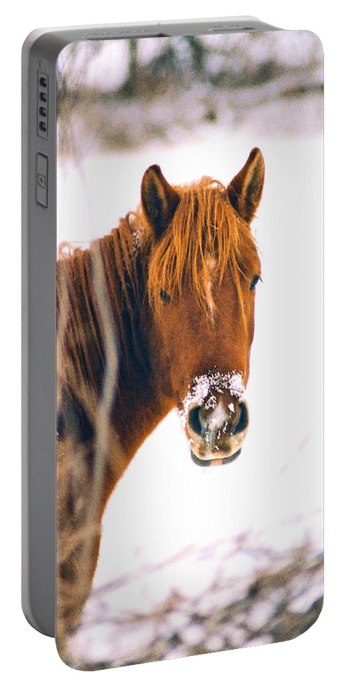 Horse Portable Battery Charger featuring the photograph Horse In Winter by Steve Karol