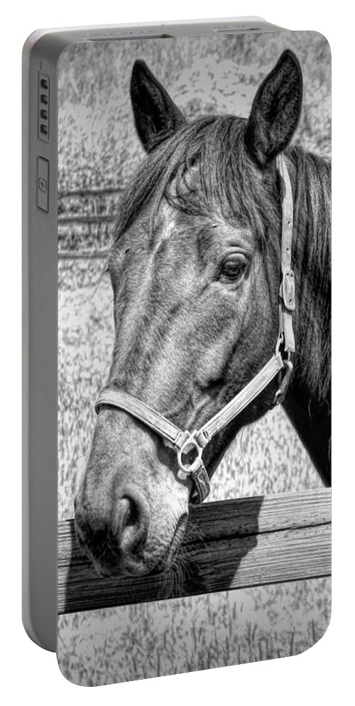 Horse Portrait In Black And White Portable Battery Charger featuring the photograph Horse Portrait In Black And White by Rose Santuci-Sofranko