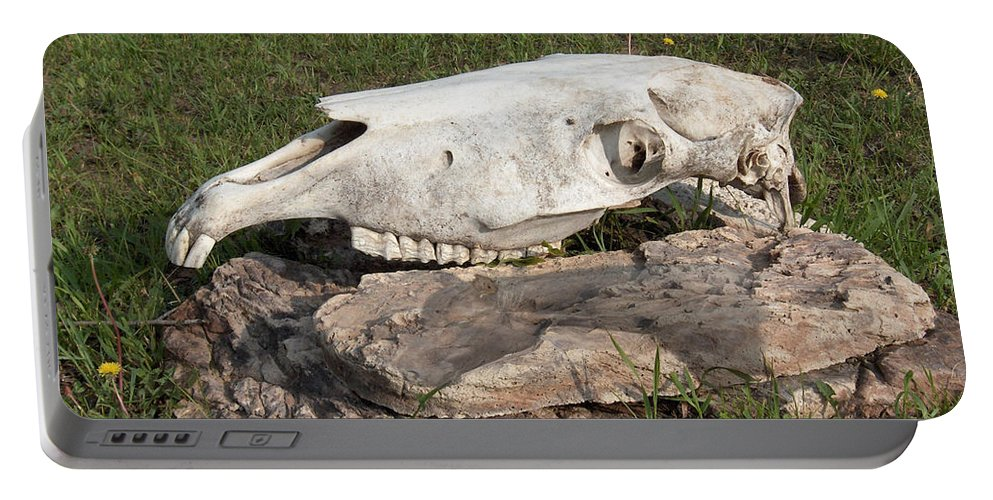 Horse Horses Spiritual Remembering Skull Spirits Ranch Herd Animals Portable Battery Charger featuring the photograph Horse Spirit 1 by Andrea Lawrence