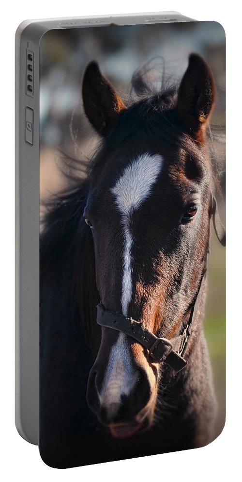 Horse Portable Battery Charger featuring the photograph Horse Whispering by Georgiana Romanovna