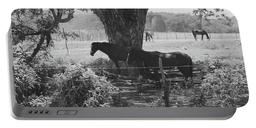 Horses Portable Battery Charger featuring the photograph Horses In The Pasture by Michelle Powell