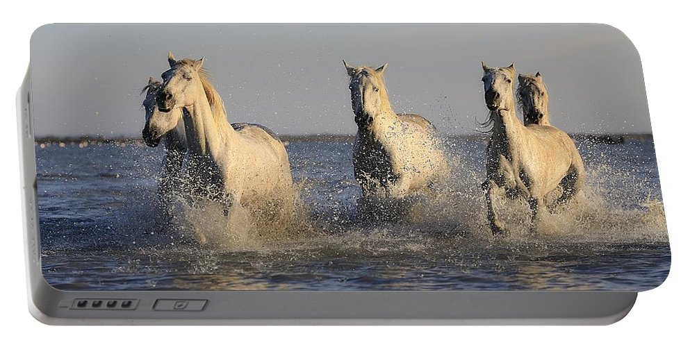 Horse Portable Battery Charger featuring the photograph Horses In Water by FL collection