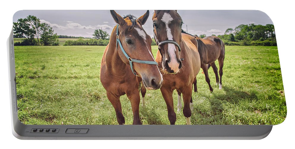 Horse Portable Battery Charger featuring the photograph Horses by Sophie McAulay