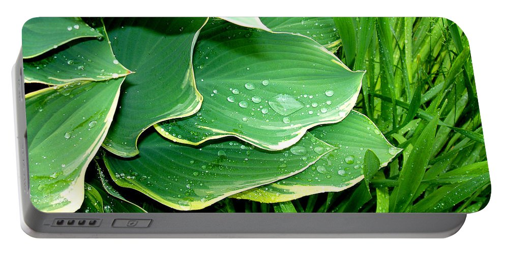 Hostas Portable Battery Charger featuring the photograph Hosta Leaves And Waterdrops by Nancy Mueller