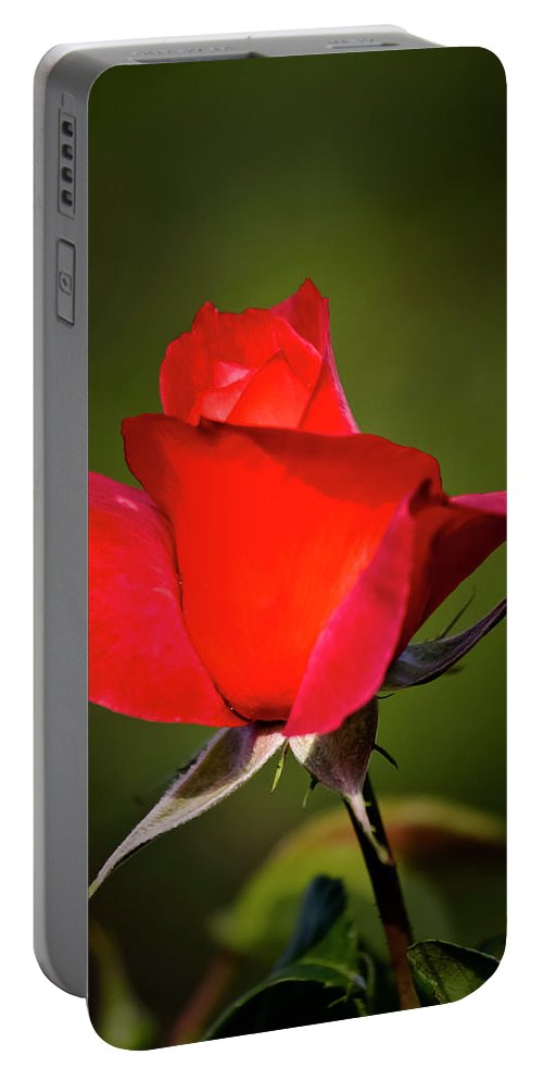 Garden Portable Battery Charger featuring the photograph Hot Cocoa Rose by Albert Seger