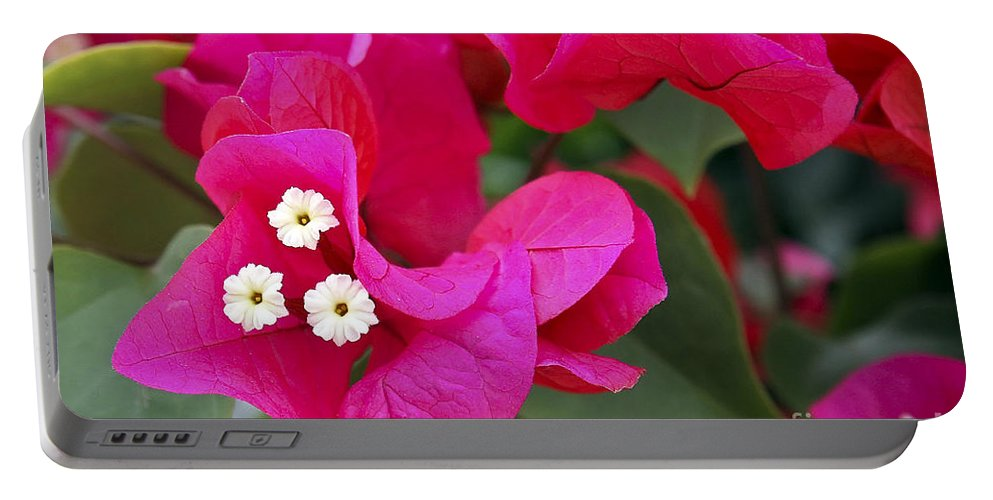 Flower Portable Battery Charger featuring the photograph Hot Pink Bougainvillea by Teresa Zieba