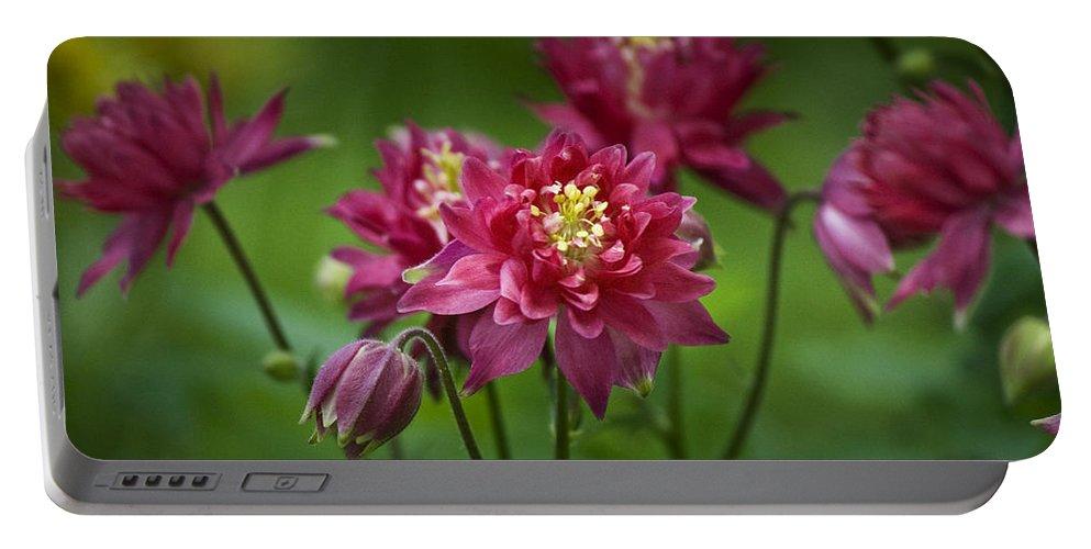 Columbine Portable Battery Charger featuring the photograph Hot Pink Columbine by Teresa Mucha