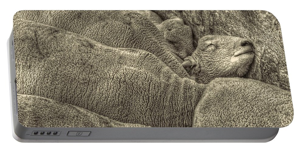 Pictorial Portable Battery Charger featuring the photograph Huddled Yearling Rams by Roger Passman