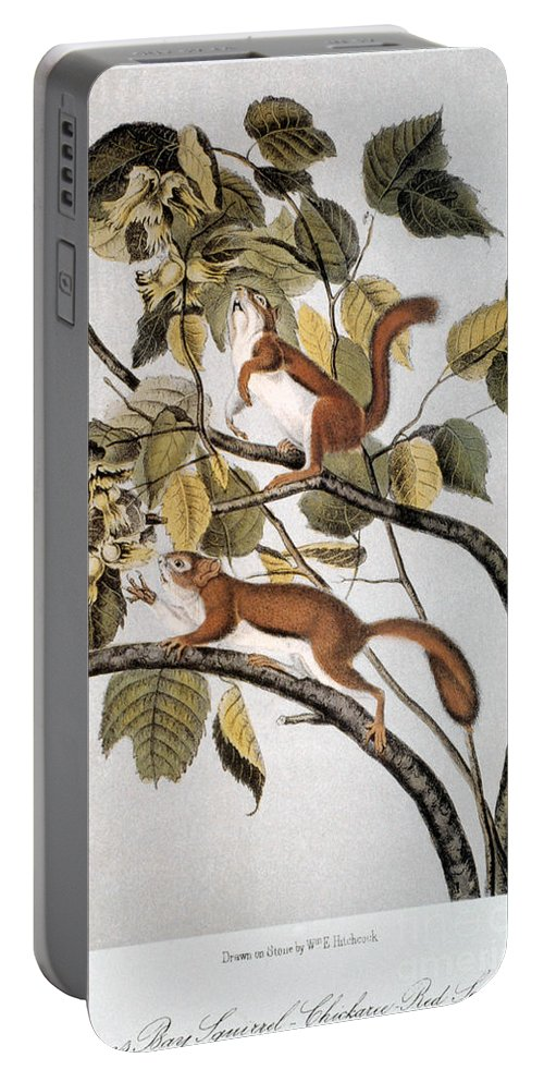 1846 Portable Battery Charger featuring the photograph Hudsons Bay Squirrel by Granger