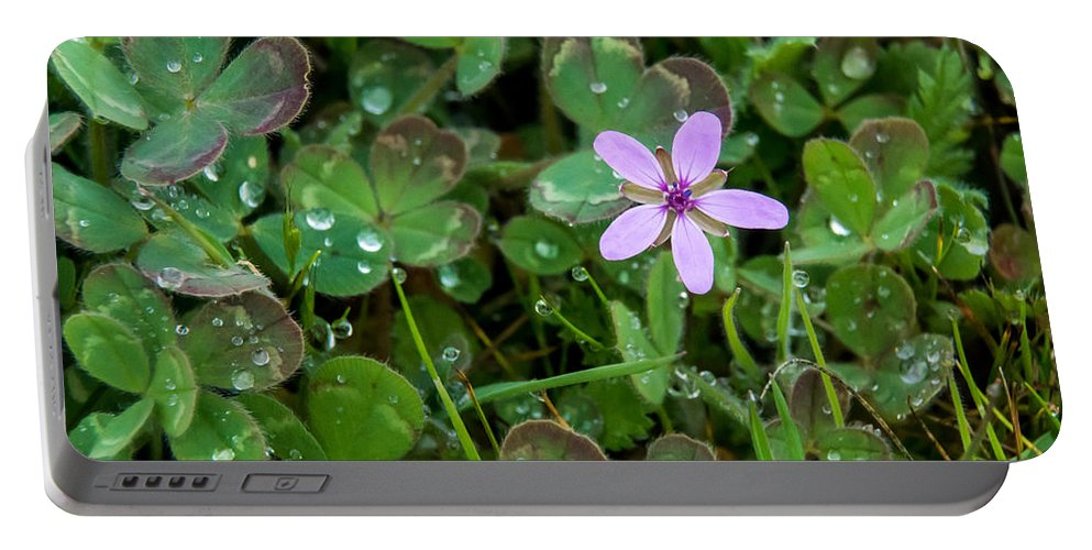 Wildflower Portable Battery Charger featuring the photograph Huge Beauty In A Small Wildflower by Mick Anderson