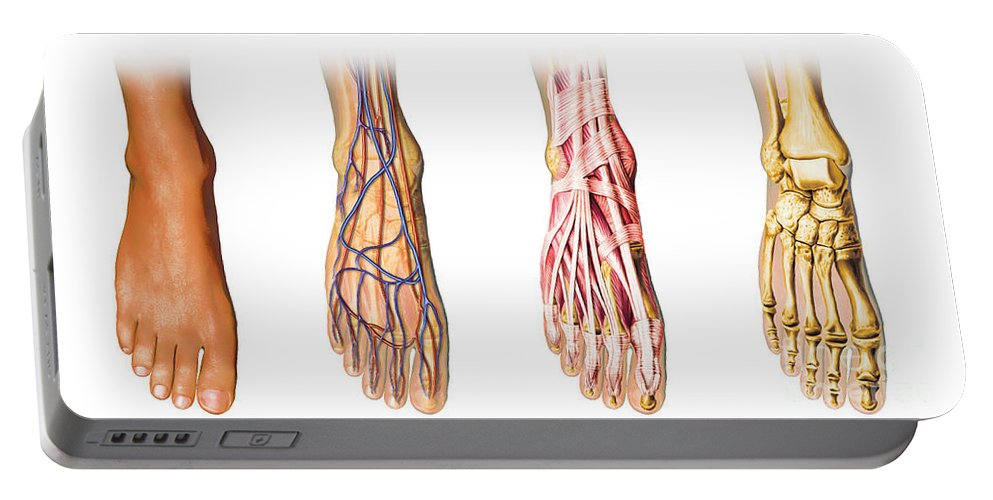 Anatomy Portable Battery Charger featuring the digital art Human Foot Anatomy Showing Skin, Veins by Leonello Calvetti