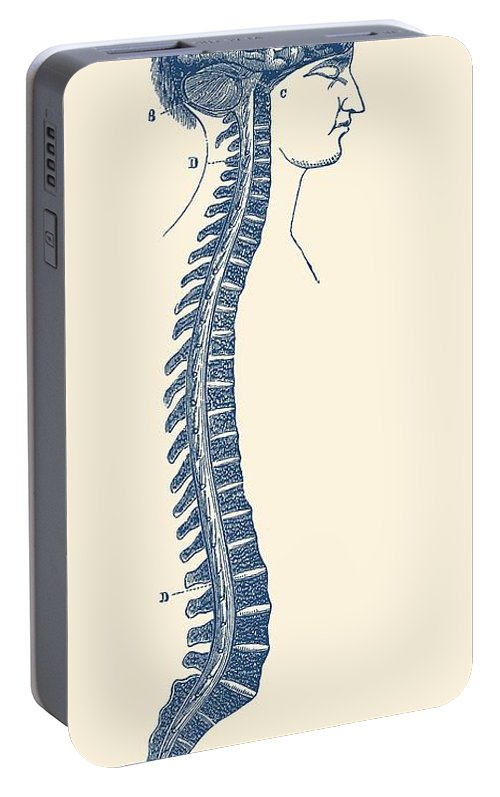 Human Spinal Cord And Brain Diagram Vintage Anatomy Portable