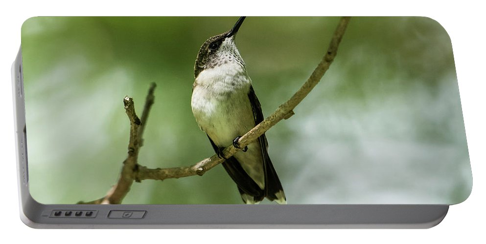 Ruby-throated Hummingbird Portable Battery Charger featuring the photograph Hummer At Rest by MCM Photography