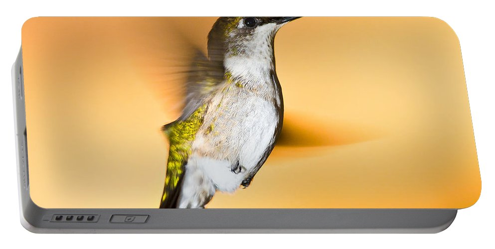 Animals Portable Battery Charger featuring the photograph Hummingbird Agains The Sunset by Rikk Flohr