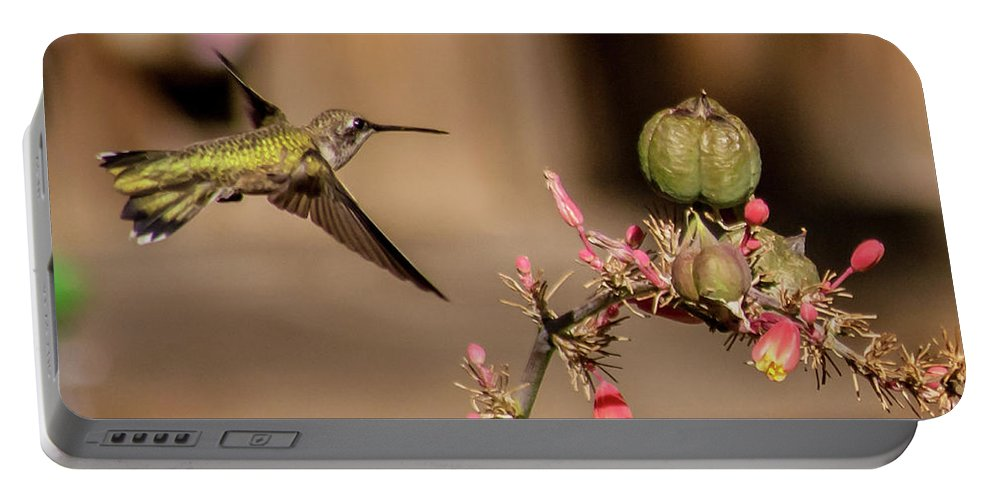 Hummingbird Portable Battery Charger featuring the photograph Hummingbird And Red Yucca by Allen Sheffield