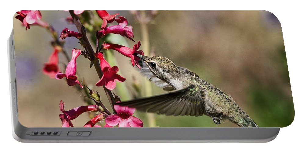 Hummingbird Portable Battery Charger featuring the photograph Hummingbird Haven by Saija Lehtonen